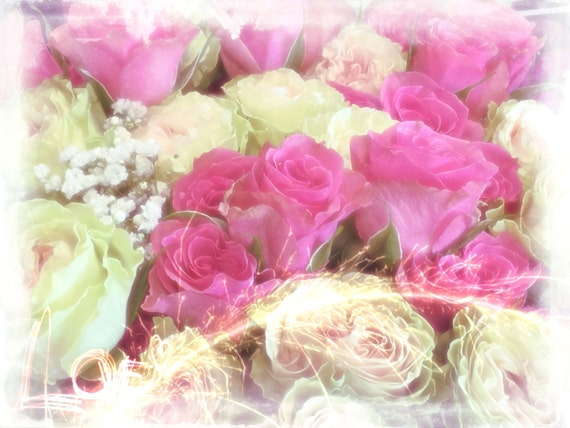 Flora Collection - Pink  and White Roses Original Photo Artwork Print