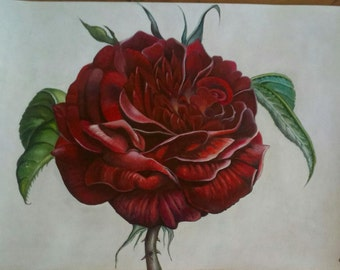 Rose Of Passion