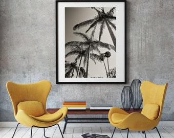 Wanderlust Roadtrip California Palm trees photography