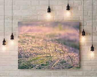 Wall Art, Canvas Print, Nature Photography, Grass, Droplets, Rain Photo