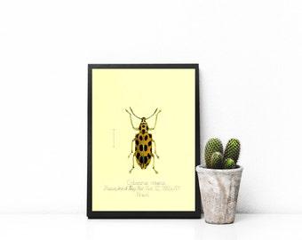 Yellow Black Spots Beetle 8x10 Printable-Vintage