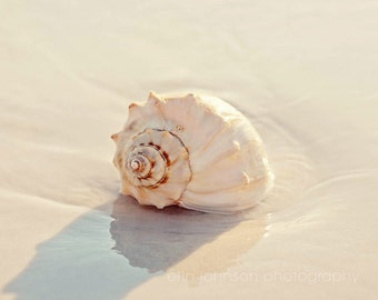 beach art, seashell photography, beach photograph, beach cottage home decor,  seashell art landscape photography, beach living room wall art