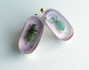 Lilac lucite cufflinks with real exotic beetles