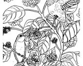 Downloadable coloring page Ruby Throated Hummingbirds on Lantana bird nature
