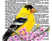 4 x 6 Art Print Watercolor on Bible Page  AMERICAN Goldfinch Wisdom  Promises Godliness Happy Gain Of Wisdom