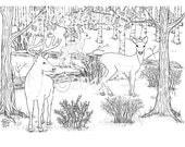Adult Coloring Page-Deer-Woodland-Forest-Deer in the Dell-Wall Decor-DIY Wall Decor-Nursery Decor-Print it Yourself