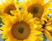 Sunflower Art, Sunflower Print, Flower Photography, Yellow Decor, Nursery Art, Fine Art Print