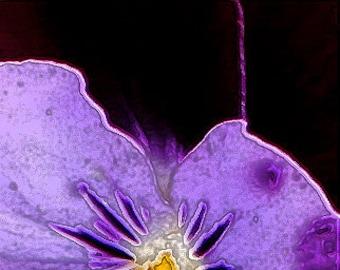 Purple Pansy Note Set