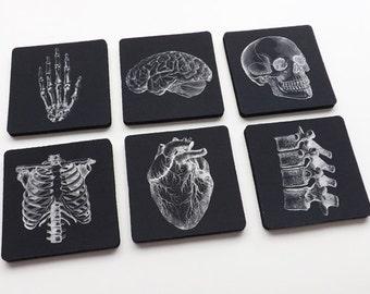 Human Anatomy Gift Coasters med student graduation masculine white black decor anatomical heart science goth kitchen nurse practitioner nerd