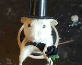 Taxidermy mouse pin front end