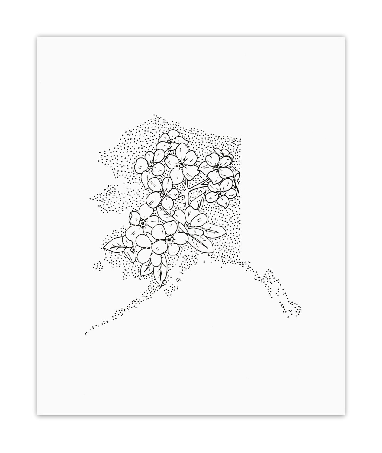 Alaska For Me Not State Flower Drawing Giclee