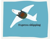 Express shipping, upgrade your shipping