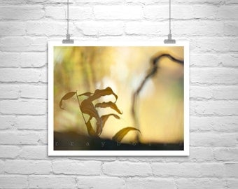 Leaf Art, Silhouette, Fall Photography, Golden Art, Nature Photography, Fine Art Print, Abstract Art, Autumn Leaves, Madera Canyon