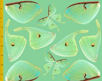 Green Luna Moth Fabric for Costume Wings - 100% Cotton Woven