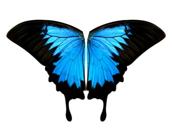 Music Festival Clothing Blue Swallowtail Butterfly Fabric Panel for Large Costume Butterfly Cape Wings over 9 foot wide Wingspan