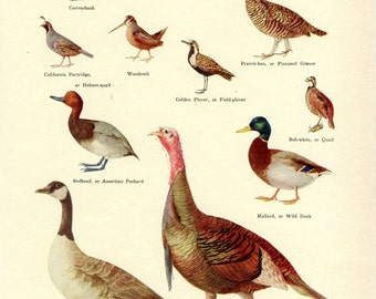 Gamebirds of North America 1933 Print-Vintage Print, Gamebirds, Birds, Bird Print