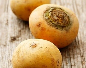 Organic Turnip Golden Globe Heirloom Vegetable Seeds