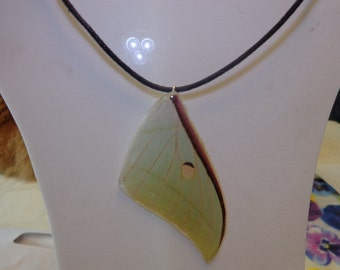 REAL Luna Moth Wing Necklace THICK & SOLID