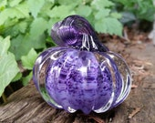Purple Mini Pumpkin, Soli...
