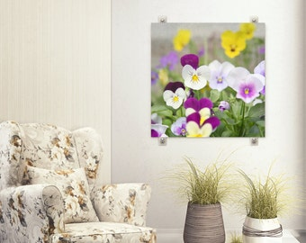 Purple Pansy Photo, Flower  Photography, Yellow Pansies, Johnny Jump Ups, Spring Cottage Home Decor, Macro Flower Photo, Floral Wall Print