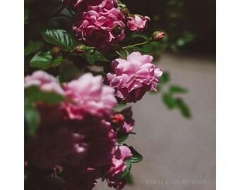 Dreamy Flower Photography - Nature Photography Botanical Print Rose Garden Art Pink Roses Print Dreamy Photography Shabby Chic Square Print