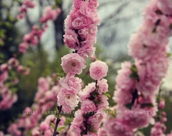 PINK BLOSSOM SPRING Original Color Fine Art Nature Blossom Flower Photograph