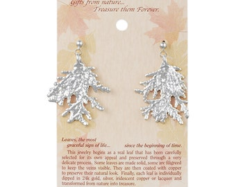 Real Cypress Leaf Dipped In Silver Post Dangle Earrings - Real Dipped Leaves - On Card