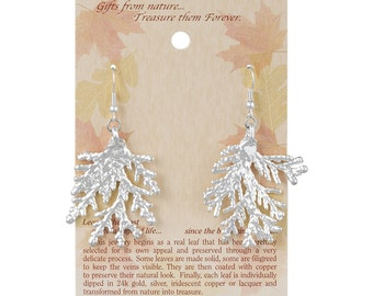 Real Cypress Leaf Dipped In Silver French Hook Earrings - Real Dipped Leaves - On Card