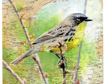 Giclee Fine Art Print - Midwest Map Bird - Endangered Species