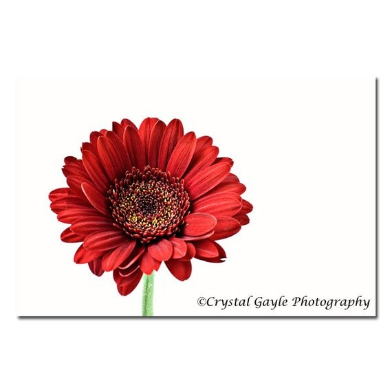 Gerbera Daisy Photography, Red Unframed Kitchen Wall Art, Feminine Bedroom Print, Office Desk Picture, Country Chic Bathroom Wall Accent
