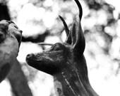 "8x10"" Signed Matboard Signature Print - 35mm Photography - B&W Sculpted Deer"