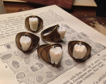 LAST ONE - Tooth Fairy Series: Real Human Molar Antique Brass Size 7.5 Ring