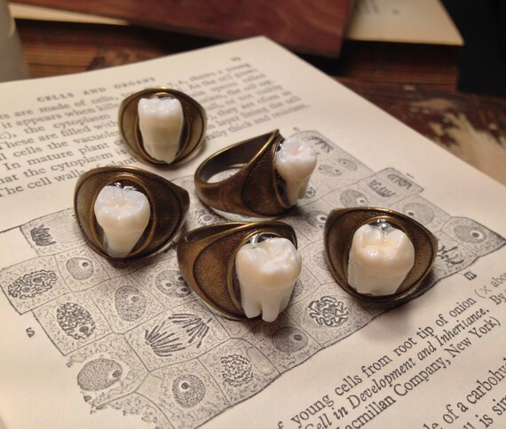 Tooth Fairy Series: Real Human Molar Antique Brass Size 7.5 Ring