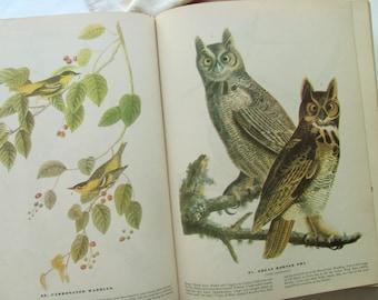Vintage The Birds of America Audubon 1946 MacMillan Book 435 Color Plates Bird Prints Illustrations Paintings Bird Watcher Framed Art Decor