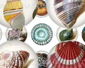 """Vintage Seashell Illustrations Ocean Nautical Conch Digital Download Collage Sheet 1"""" Inch Circles Bottle Caps Marine Biology Oceanography"""