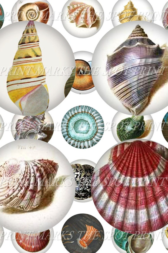 "Vintage Seashell Illustrations Ocean Nautical Conch Digital Download Collage Sheet 1"" Inch Circles Bottle Caps Marine Biology Oceanography"
