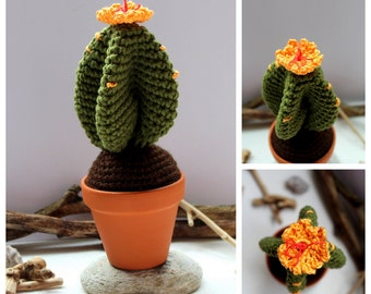 Cactus green with orange flower ( Succulent garden)