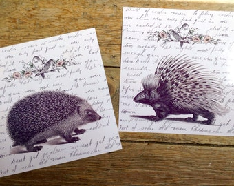 Letters from Hank and Toby - Vintage Style Antique Hedgehog & Porcupine Print Set from Curious London