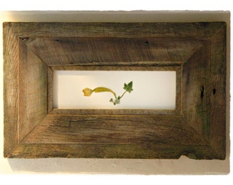 Squashbuckler ||| squash blossom in weathered wood
