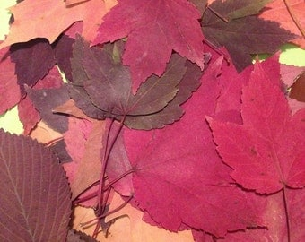 Pressed Leaves Fall Leaves Assortment 50 Pressed Leaves Wedding Decoration Table Decor Leaf Confetti Crafts