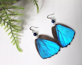 Blue Butterfly Wing Earrings with Seaglass, Nature Earrings, Morpho Menelaus