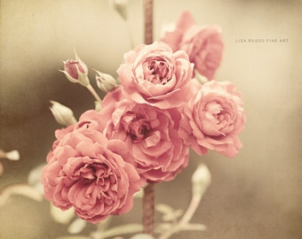 Pastel Pink Print or Canvas Wrap, Shabby Chic Decor, Pink Flower Print, Pink Bathroom Decor, Botanical Print, Flower Picture.