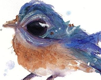 12 x 12 Bird Art, Western Bluebird, Bird Art Print