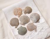 7 whole fossil scallop shells (no.54)