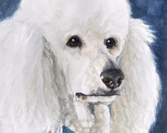 Poodle Art Print, White Poodle Dog Art, Poodle Portrait Art, Poodle Watercolor Print, Dog Art Print from Painting by P. Tarlow