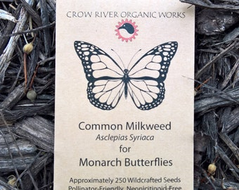 Common Milkweed Seed for Monarch Butterflies - Great for Winter Sowing!