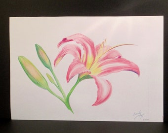 Pink Tiger Lily  watercolor painting