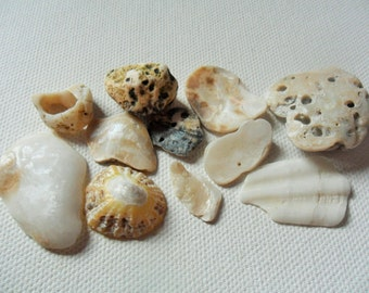 Pretty and pearly English beach shell and pebble mix