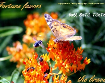 The Stand-Off - American Lady Butterfly vs. a Bee with Inspirational Quote