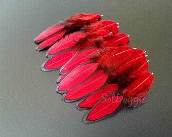 Red Feathers Black Laced Hen Feathers Red Black Feathers DIY Craft Supplies - 10